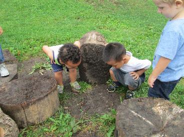 Children looking under a tree stump