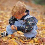Środowisko naturalne w Stanie Illinois: Liście w naszym otoczeniu