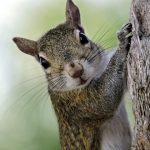 La naturaleza en Illinois. Los mamíferos
