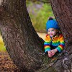 Środowisko naturalne w Stanie Illinois: Drzewa, ktore widzimy